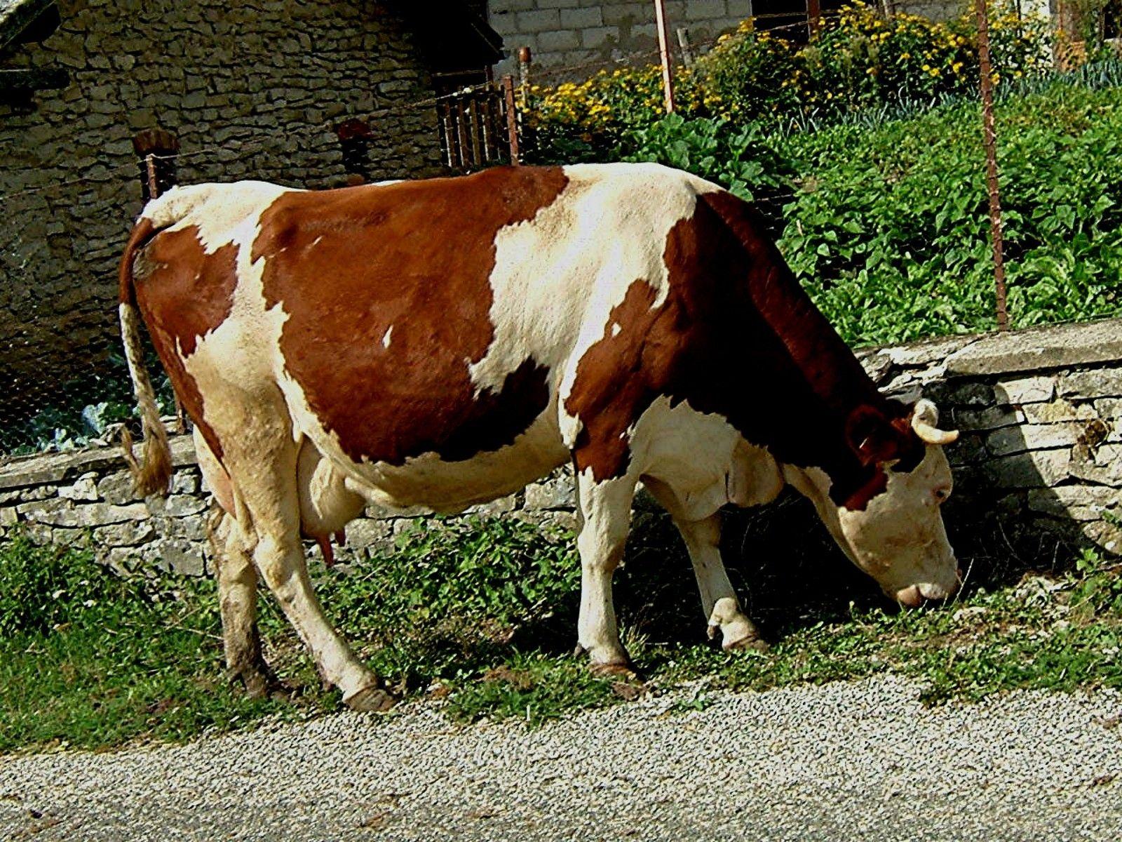 animo de la ferme vache. Black Bedroom Furniture Sets. Home Design Ideas